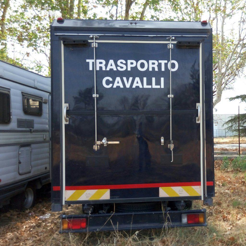 fiat Iveco usato trasporto cavalli (1)