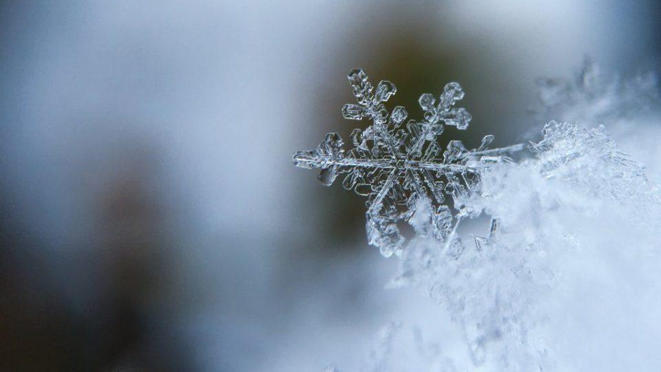 Snow-neve