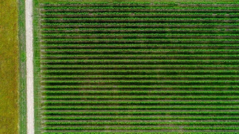 Agricoltura – Agricolture