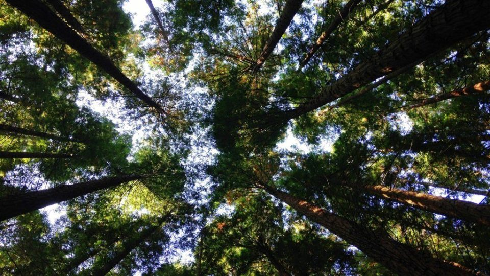 ambiente – green – planet